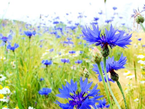 albastrele1