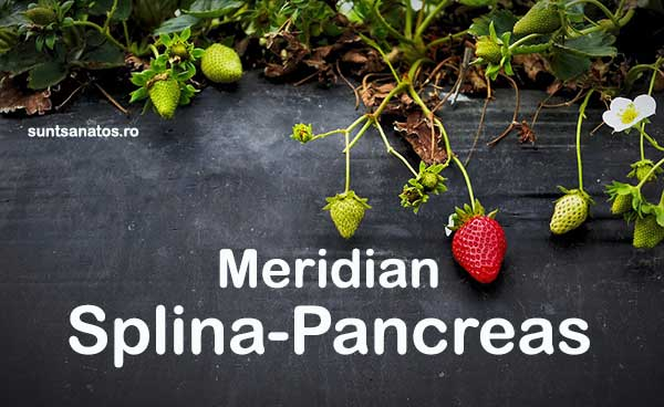 tinctura_meridian_splina-pancreas