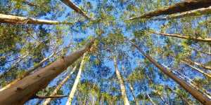 3 remedii naturiste pentru sanatatea plamanilor