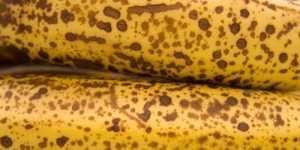 Beneficii ale bananelor foarte coapte, cu pete maronii