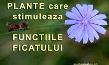 Plante care stimuleaza functiile ficatului