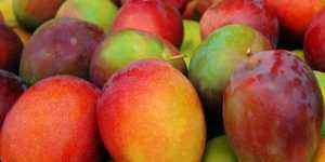 Mango -  bogat in antioxidanti