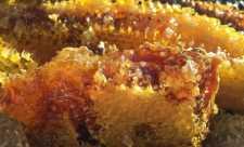 Ce este CAPACEALA. Elixirul secret produs de albine, mai puternic decat mierea sau propolisul
