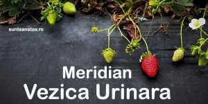 Tinctura Meridian Vezica Urinara