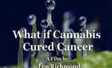 Dar daca marijuana a vindecat cancerul (2010)