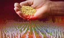 Semintele mortii: Dezvaluirea Minciunilor despre Organismele Modificate Genetic