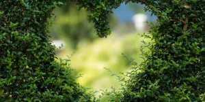 IUBIREA te ajuta sa te vindeci