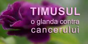 Timusul - o glanda contra cancerului