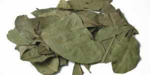 Dafinul (Laurus nobilis)