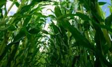 Dezvaluiri ale doctorului Mencinicopschi despre micro-organismele modificate genetic (OMG)