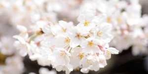 Florile comestibile - izvor de frumusete, enzime si vitamine