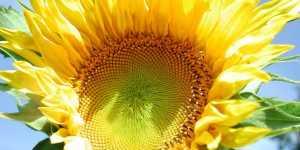 Maria Verdi - Vindecarea cu Soare si fiicele sale - plantele medicinale