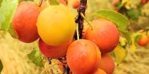 Alimente si plante medicinale care favorizeaza savurarea starii de fericire (1)