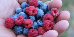 Alimente care contribuie la reducerea inflamatiei din organism