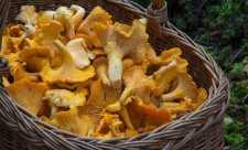 Ciupercile, sursa de vitamine si minerale