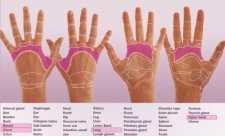 Reflexologie - harta mainii