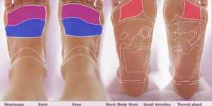 Reflexologie - harta piciorului