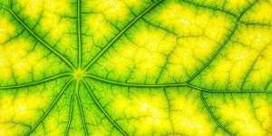 Valeriu Popa - Curatarea limfei - Tratamente naturiste si dieta