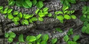 Vindecarea naturala, purificarea organismului si fortificarea sistemului imunitar