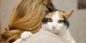 Pisica, un leac minunat pentru vindecarea TIROIDEI