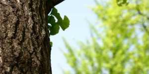 Plante care imbunatatesc MEMORIA