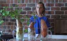 Experiment simplu despre importanta legumelor organice