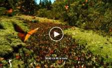 Louie Schwartzberg: Natura. Frumusete. Gratitudine.