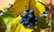 Boala, imbatranirea si antioxidantii