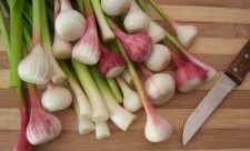 Cele 8 binefaceri ale usturoiului